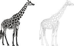 Giraffe. Vector illustration of an giraffe Royalty Free Stock Image