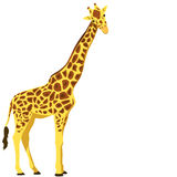 Giraffe, vector illustration Stock Image
