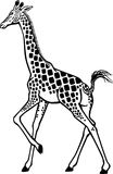 Giraffe Walking Royalty Free Stock Photo