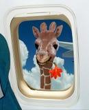 Giraffe is welcoming to amazing Africa ! Stock Photo