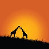 Giraffe in wilderness color vector Royalty Free Stock Photos
