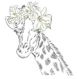 Giraffe in a wreath of flowers. Stock Photo