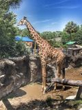 Giraffe am Zoo Stockbild