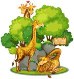 Giraffe in the zoo. Illustration vector illustration
