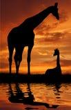Giraffe zwei über Sonnenaufgang Lizenzfreies Stockfoto