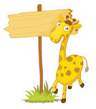 Giraffee Stock Photography