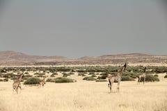 Giraffegehen Lizenzfreies Stockbild