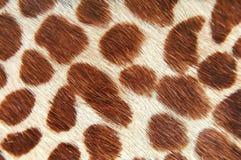 Giraffehaut Lizenzfreie Stockfotos