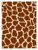 Giraffehaut Stockbild