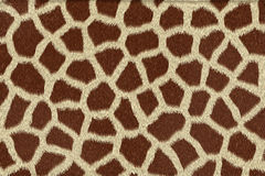 Giraffehautbeschaffenheit Stockfoto