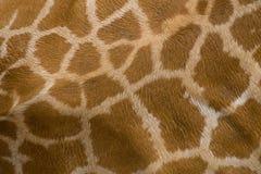 Giraffehautbeschaffenheit Stockfotografie
