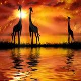Giraffen stock illustratie