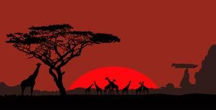 Giraffen in de wilde aard Royalty-vrije Stock Fotografie