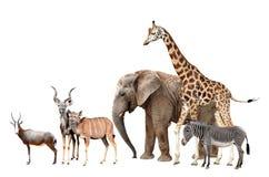 Giraffen-, Elefant-, Zebra-, Blesbok-Antilopen und Kudu Stockfotografie