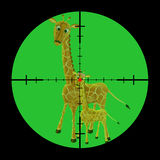 Giraffen gejagt Stockfoto