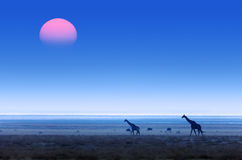 Giraffen mit rotem Sonnenuntergang und blauem dunstigem Himmel Stockfoto