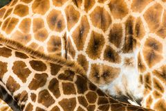 Giraffen-Muster Stockfotografie
