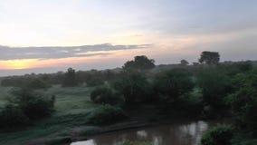 Giraffen in Savannah Safari in Kenia stock footage