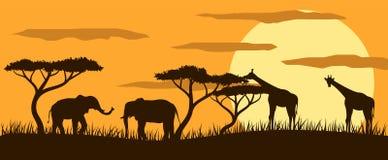 Giraffen und Elefanten in der Savanne an der Sonnenuntergang-flachen Art lizenzfreie abbildung