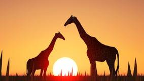 Giraffen und Sonnenuntergang Lizenzfreie Stockfotos