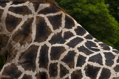 Giraffenmuster Stockfoto