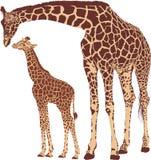 Giraffenmutter mit Jungem Stockfoto