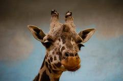 Giraffenporträt im Zoo lizenzfreie stockfotos