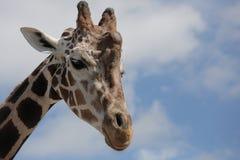 Giraffenprofil des Kopfes Stockbild