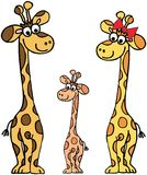 giraffes семьи Стоковая Фотография RF
