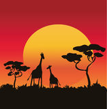 giraffes illustration libre de droits