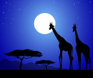 Giraffes in African safari at night-vector Stock Images