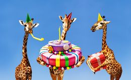 Giraffes on birthday party with cake and present