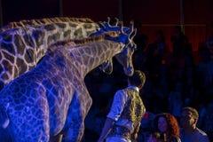 Giraffes in circus Royalty Free Stock Photo