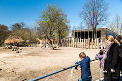 Giraffes in Copenhagen Zoological Garden Royalty Free Stock Photo