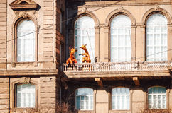 Giraffes drink tea on the balcony of the Zoological Institute of Helsinki. Royalty Free Stock Images