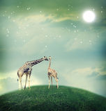Giraffes in friendship or love concept image. Two Giraffes, mother and child in friendship or love theme image at a fantasy landscape Stock Photo