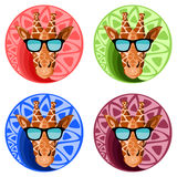 Giraffes heads with sunglasses on color background. Royalty Free Stock Photo