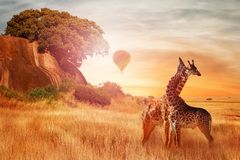 Free Giraffes In The African Savannah Against Sunset With Balloon. Wild Nature Of Africa. Artistic African Image Stock Photo - 129431610