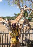 Giraffes in Kruger park South Africa Royalty Free Stock Images