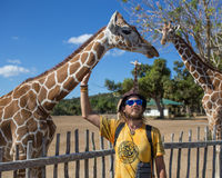 Giraffes in Kruger park South Africa. Giraffes and man in Kruger park South Africa Stock Image