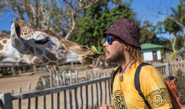 Giraffes in Kruger park South Africa. Giraffes and man in Kruger park South Africa Stock Photos