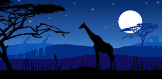 Giraffes in moonlight. Illustrated night scene in Africa with giraffes under moon and stars Stock Image