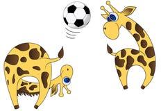 Giraffes-players Stock Image