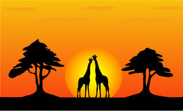 Giraffes - safari sunset Royalty Free Stock Image