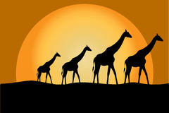 Giraffes in savanna Royalty Free Stock Photos
