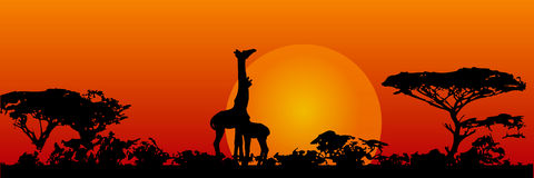Giraffes in the savanna Stock Image