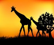 Giraffes in the savannah. Two giraffes in the savannah near a tree vector illustration Royalty Free Stock Photography
