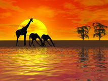 Giraffes silhouette. African red sunset with giraffes silhouette Stock Illustration