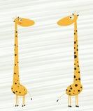 Giraffes. Two giraffes falling in love cartoon Stock Image