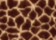 Giraffeskin Stockbild
